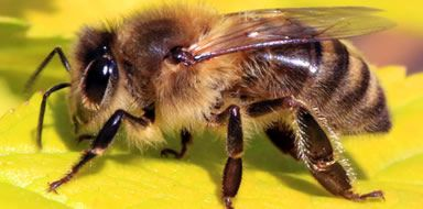pest problems - bee control stockport manchester cheshire tameside
