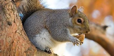 squirrel control stockport manchester cheshire tameside
