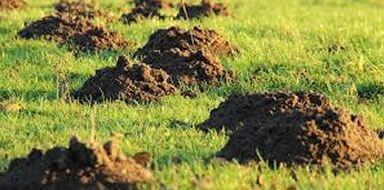 Mole control stockport manchester cheshire tameside